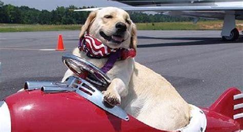 portare gatto in aereo animali in aereo le regole per viaggiare con e gatto
