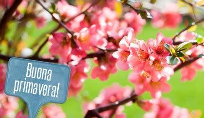 fiore portafortuna piante portafortuna 9 fiori per augurare una buona