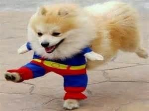 Homemade Dog Costumes » Home Design 2017