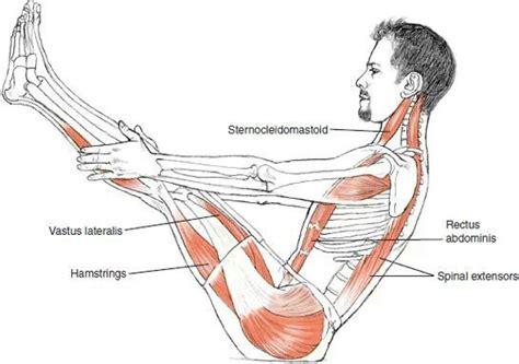 boat pose alignment 17 best anatomy images on pinterest yoga anatomy human