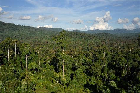 The Of The Forest tropical forest