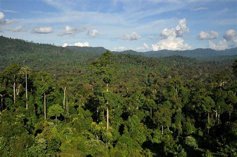 Tropical Jungle tropical jungle photos www pixshark images