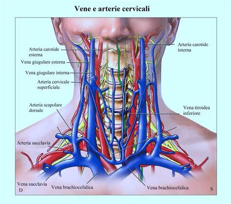 tiroide e mal di testa anatomia della tiroide