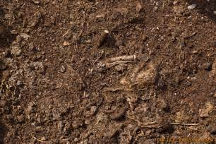 soil texture thetextureclub com