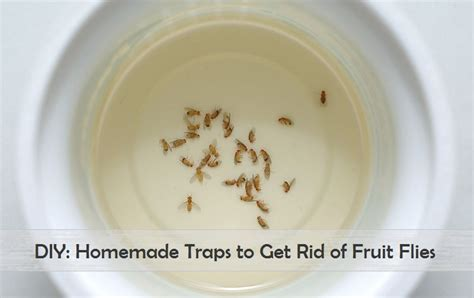 7 Ways To Get Rid Of Fruit Flies by 8 Treatments To Get Rid Of Acne Scars Pimples At
