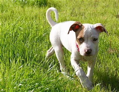when can i take my puppy outside for a walk outdoor dogs the about leaving your outside all the time