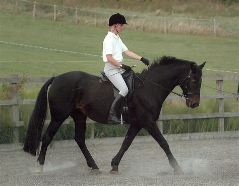 real how to ride in harmony with horses books pegasus magazine the magazine for the south east