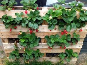Best 25  Strawberry planters ideas on Pinterest