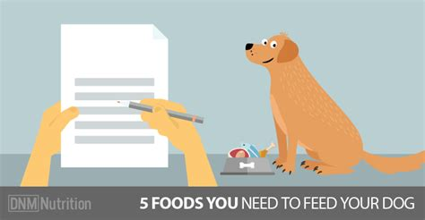 how do you feed puppy food five foods you should feed your