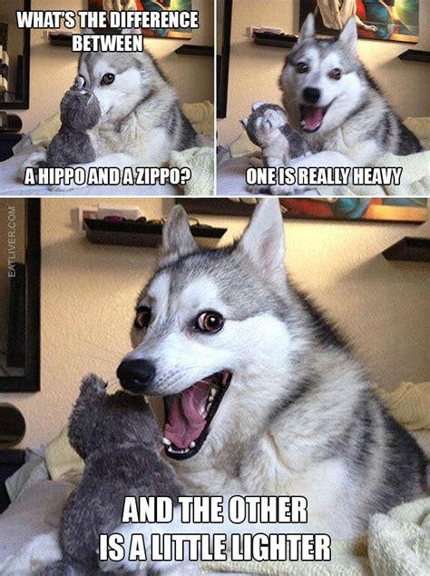 pun dog      humor pin community