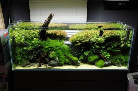 freshwater aquascaping designs 17 best images about aquascaping on pinterest aquarium