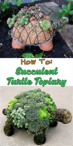 how to make a succulent turtle how to create a succulent garden wreath gardens summer