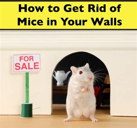 how to get rid of mice in walls victor 174