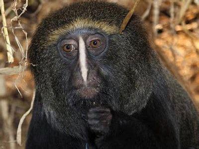 imagenes raras pero reales especies de animales raras pero reales im 225 genes taringa