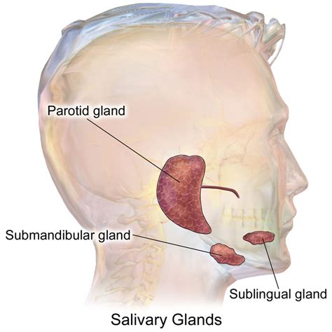 Foxx Has Surgery For Gland Problem by Salivary Gland Problems Submandibular Gland Ent Clinic