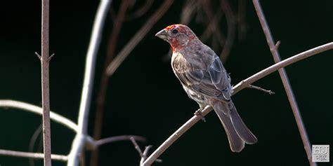 birds molting process h j ruiz avian101