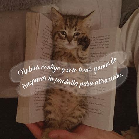 imagenes con frases bonitas de gatitos 10 im 225 genes de gatitos tiernos con frases lindas para