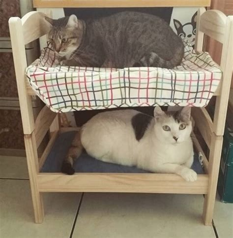 Bunk Beds For Cats Are Running To Buy These Tiny Ikea Doll Beds But Not For The Reason You Think Heroviral