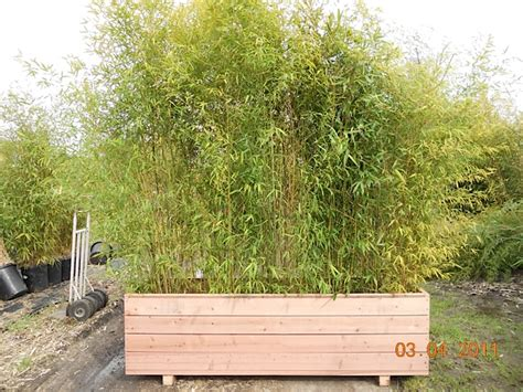Planters For Bamboo by Gallery West County Oasis Bamboo Garden