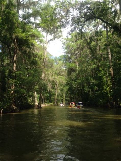 cat boat tours photo1 jpg picture of cat boat tours mount dora
