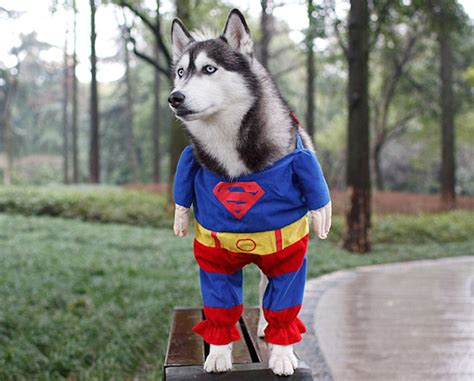 25 pet halloween costumes that are so cute we cant even 25 terrifying cute halloween costumes for pets