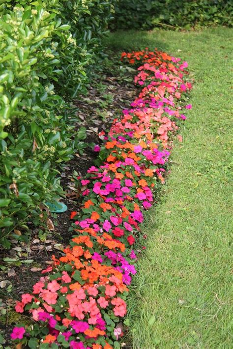 Is Pink This Year by Impatiens Pink And Orange This Year Flores