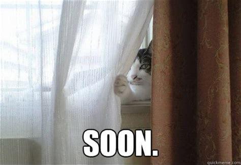 Cat Soon Meme - 30 funny quot soon quot meme pics