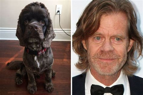 dogs that look like humans dogs look like something else human owner images pics 23 mojly
