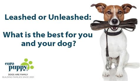 all dogs unleashed leashed or unleashed what is the best for you and your