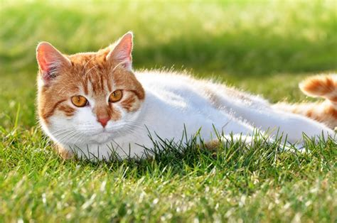 how to keep cats out of flower bed keeping cats out of certain parts of your garden pets4homes
