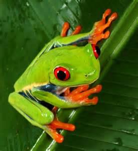 do tree frogs change color meine freunde eine hexe ein kobold und ich k 252 ss den frosch