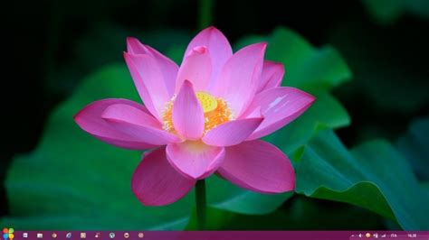 themes for windows 7 flower 25 best windows 8 themes with inspiring visual styles