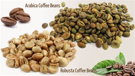 different types of coffee beans fedeccon