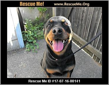 rottweiler rescue md maryland rottweiler rescue adoptions rescueme org