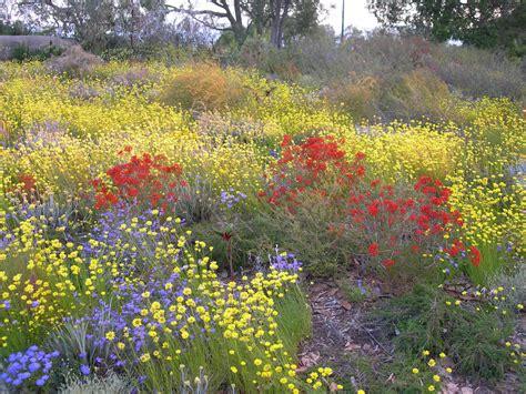 flowers in australian gardens western australia wildflowers