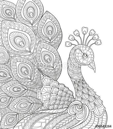 vektor peacock antistress coloring page black and