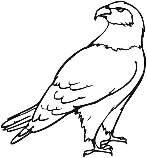 baby eagle coloring page gallery