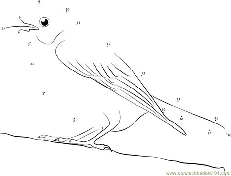 Free Northern Mocking Bird Coloring Pages Mockingbird Coloring Page