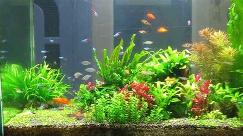 Aquascape Indonesia by Aquascape Medan Indonesia