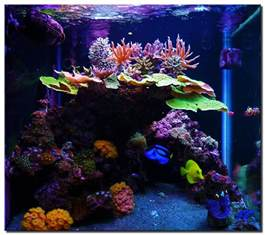Marine Tank Aquascaping marine aquarium ideas small aquarium ideas 2017 fish tank maintenance