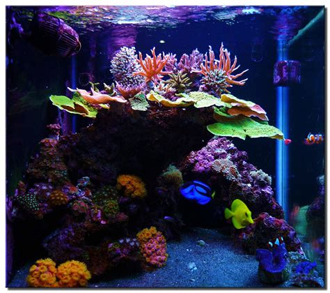 Saltwater Aquascaping by Marine Aquarium Ideas Small Aquarium Ideas 2017 Fish