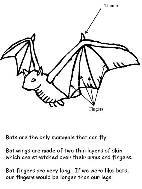preschool bat coloring page bat facts coloring book page preschool classroom