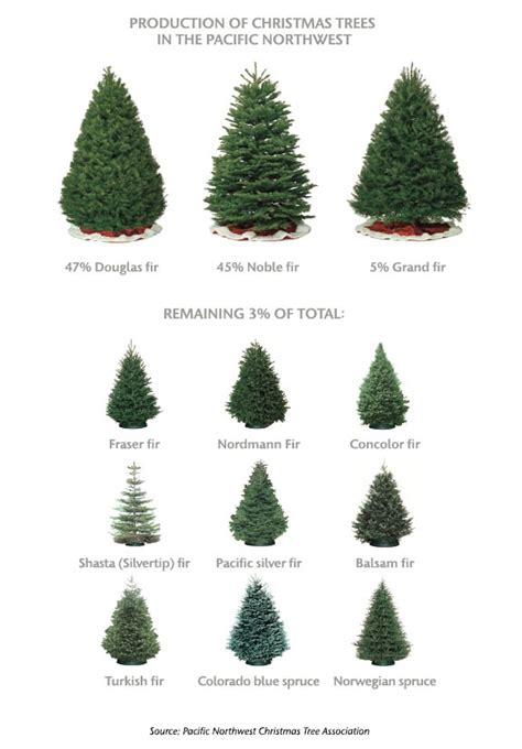 images different types of christmas trees trees types rainforest islands ferry with tree type madinbelgrade