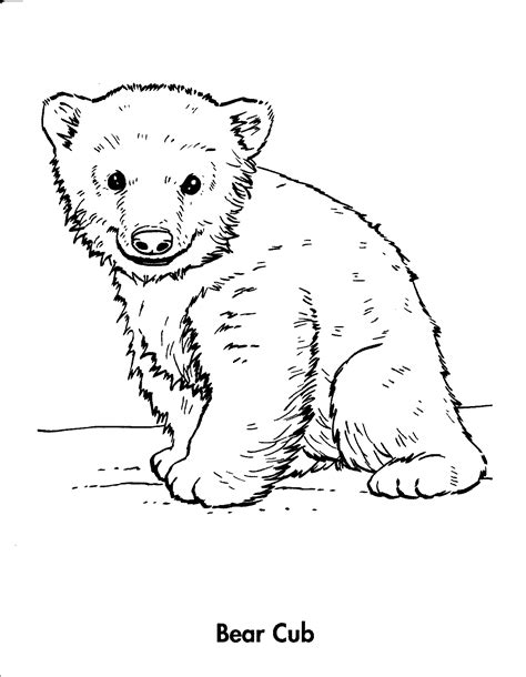 Coloring Page Bear Cub | animals cubs related keywords suggestions animals cubs