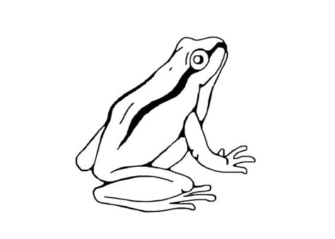 Cute Tree Frog Coloring Pages Tree Frog Coloring Page