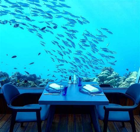 Ikan Bawah Laut 9 9 restoran bawah laut ini bikin nggak fokus makan saking