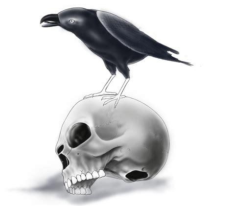 raven on skull sketch by mickmog on deviantart