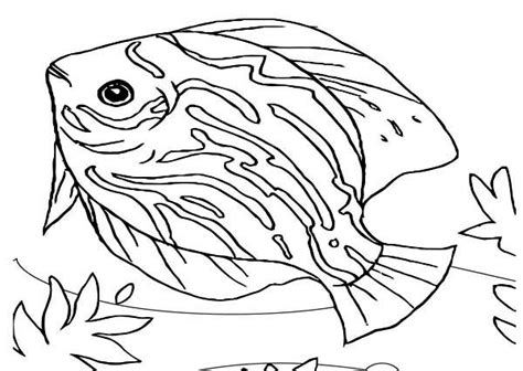 coloring pages of saltwater fish sea animals beautiful saltwater fish sea animals