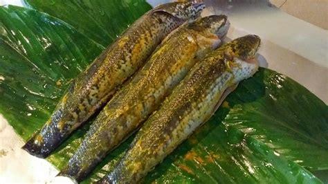 Minyak Ikan Haruan zulfaza cooking ikan haruan bakar dan masak lemak