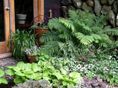 Patio Plants For Shade by Plants And Shrubs For Shade Shady Gardens